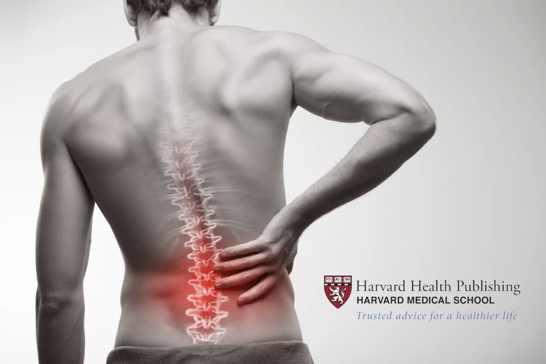 Harvard Medical School: Chiropractic Should Be Your First Option For Back Pain